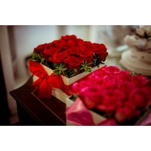 Colectia Noua 2012 - 2013   Trandafiri cu Floari Mari   Trandafiri cu Flori Grupate. trandafiri criogenati superbi