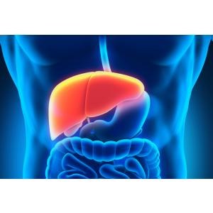 slabire. Detoxifierea ficatului – primul pas in curele de slabire