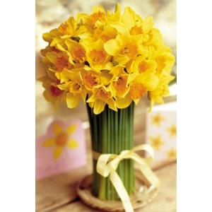 Florile care fac primavara mai frumoasa!
