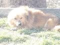 angajari video chat galati. A VISIT TO DOG SHELTERS IN GALATI,ROMANIA