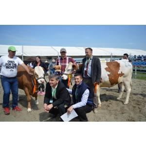 """Agraria 2016 – """"Un spectacol al rasei Baltata tip Simmental"""""""