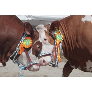 taurine. SEMTEST-BVN Mures - Performanta si spectacol cu genetică de vârf  la AGRARIA 2015