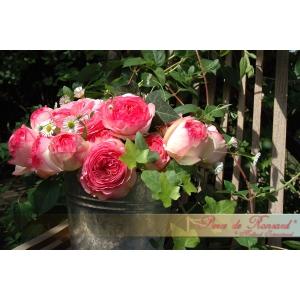 Trandafirul Supranumit