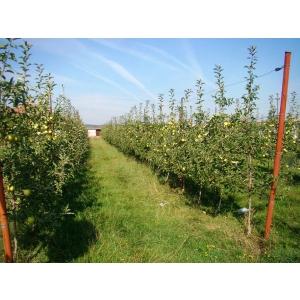 arbusti fructiferi. www.ValahiaGarden.ro a lansat singura hartă a productivităţii pomilor fructiferi în toate localităţile din România