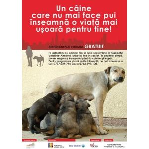 comunicate de presa gratuite. Campanie de sterilizari gratuite pentru caini - Bucuresti  Citeste mai mult: Comunicate de Presa