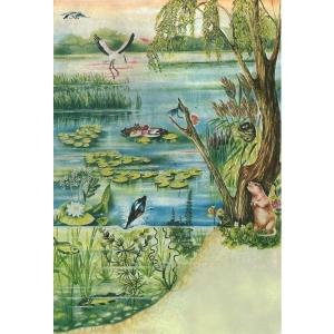 habitate. Malul lacului - Habitat - specii
